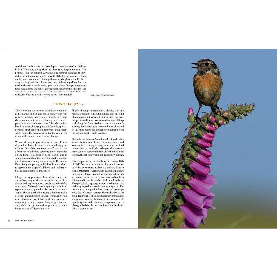 How to see birds: An Enthusiast's Guide product photo Front View - additional image 1 L