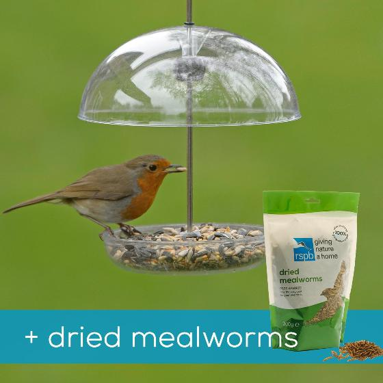I love robins feeder & dried mealworms product photo Default L