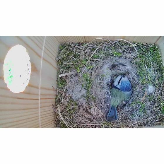 RSPB IP camera nest box system product photo additional image 4 L