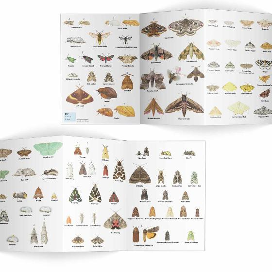 Moths identifier chart - RSPB ID Spotlight series product photo Side View -  - additional image 3 L