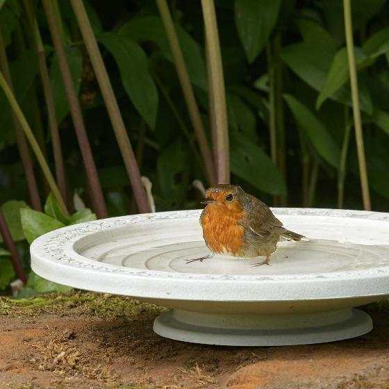Nature Oasis bird bath & drinker product photo Front View - additional image 1 L