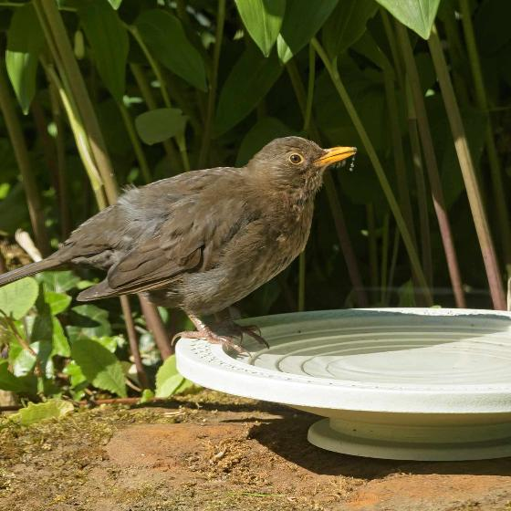 Nature Oasis bird bath & drinker product photo additional image 4 L