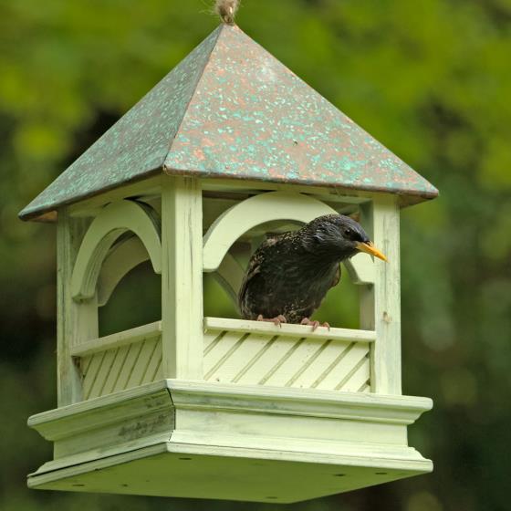 Royal Bempton Hanging Bird Table - RSPB Shop