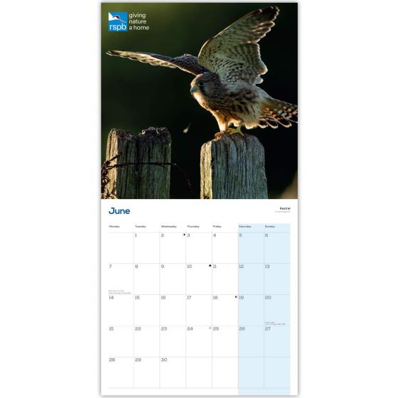 RSPB Birds of prey calendar 2021 product photo Side View -  - additional image 3 L