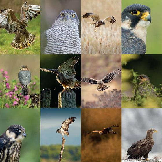 RSPB Birds of prey calendar 2021 product photo Back View -  - additional image 2 L