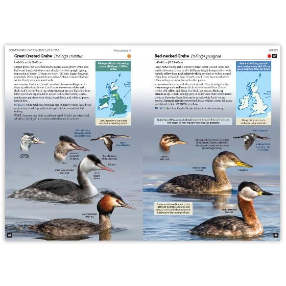 Britain's Birds, Second Edition product photo Side View -  - additional image 3 L