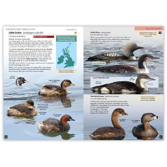 Britain's Birds, Second Edition product photo Back View -  - additional image 2 L