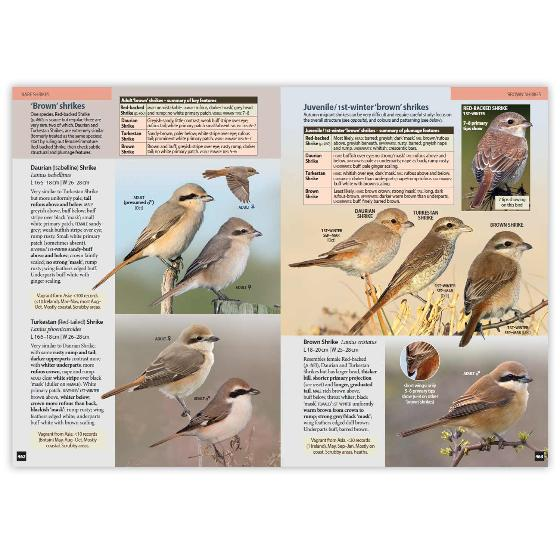 Britain's Birds, Second Edition product photo Front View - additional image 1 L
