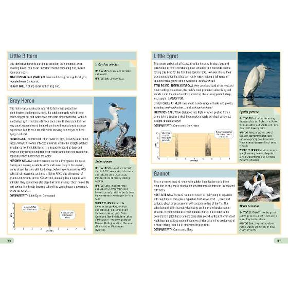 RSPB Guide to Birdsong by Adrian Thomas product photo Side View -  - additional image 3 L