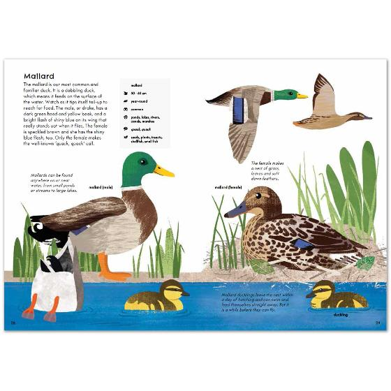 RSPB Nature Guide: Birds product photo Back View -  - additional image 2 L
