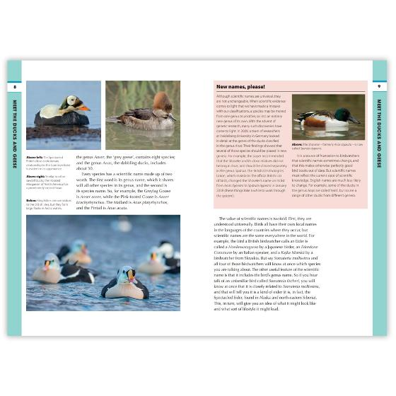 RSPB Spotlight Ducks and Geese product photo Side View -  - additional image 3 L