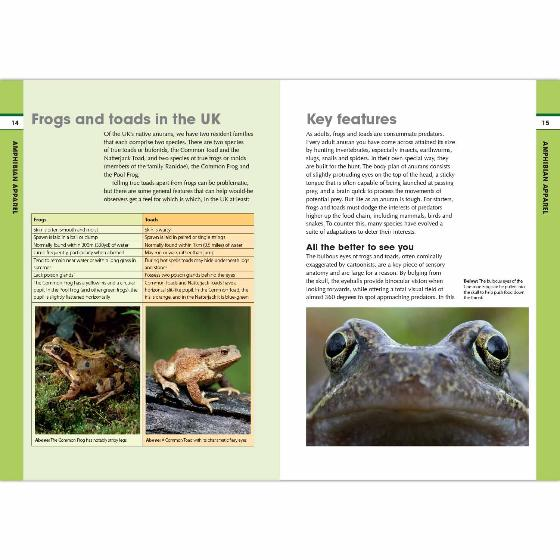 RSPB Spotlight Frogs and Toads product photo Side View -  - additional image 3 L