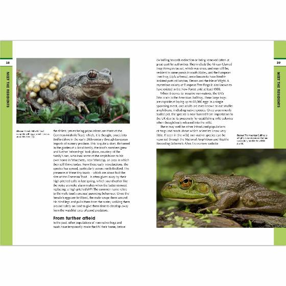 RSPB Spotlight Frogs and Toads product photo Back View -  - additional image 2 L