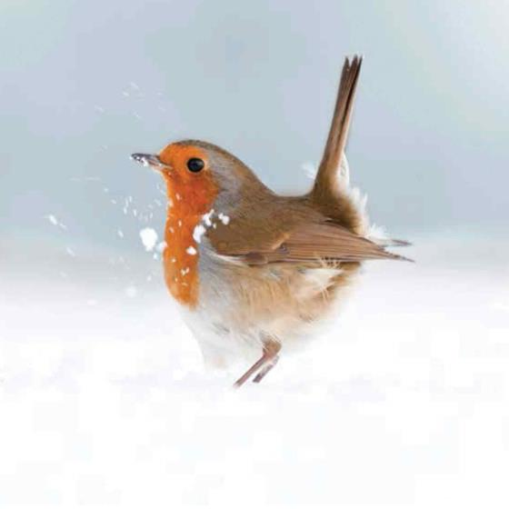 Ruffled robin RSPB charity Christmas cards - 10 pack product photo