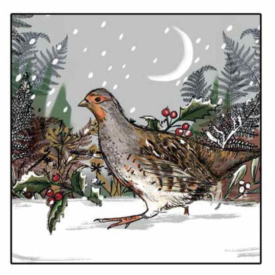 Silent night RSPB charity Christmas cards - 20 pack product photo Back View -  - additional image 2 L