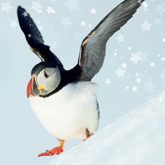 Snow fun RSPB charity Christmas cards - 10 pack product photo