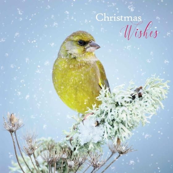 Snowy perch duo RSPB charity Christmas cards - 10 pack product photo Side View -  - additional image 3 L