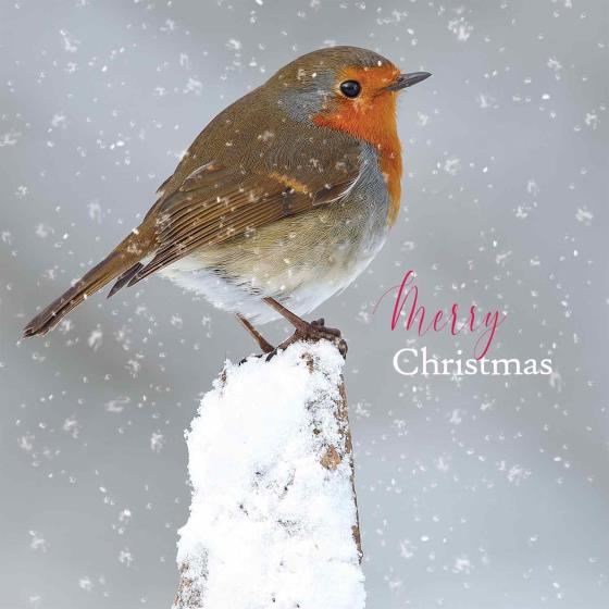 Snowy perch duo RSPB charity Christmas cards - 10 pack product photo Back View -  - additional image 2 L