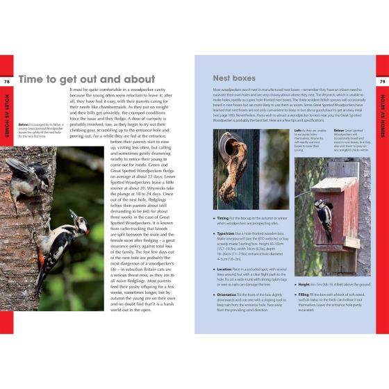 RSPB Spotlight Woodpeckers product photo Back View -  - additional image 2 L