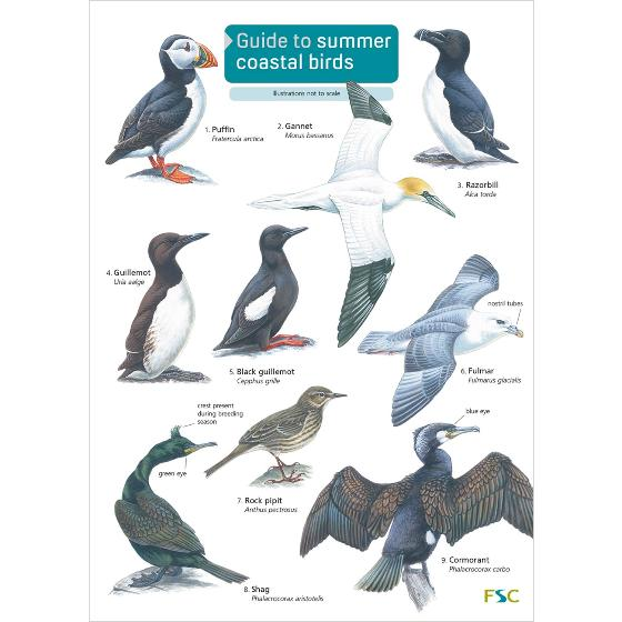 Guide to summer coastal birds chart product photo