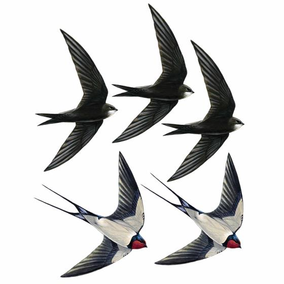 Swift and swallow window stickers product photo Default L