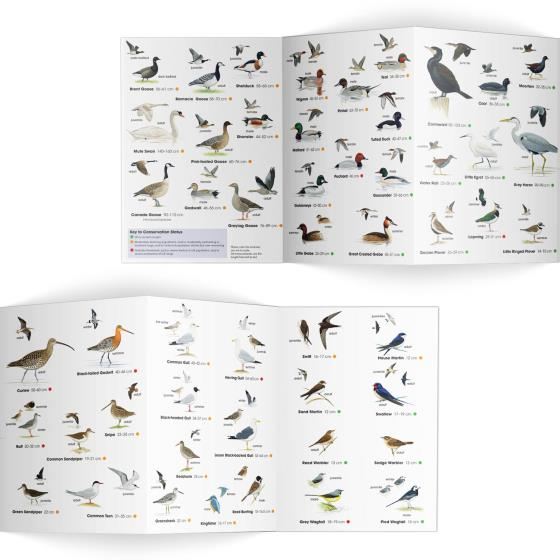 Wetland birds identifier chart - RSPB ID Spotlight series product photo Side View -  - additional image 3 L