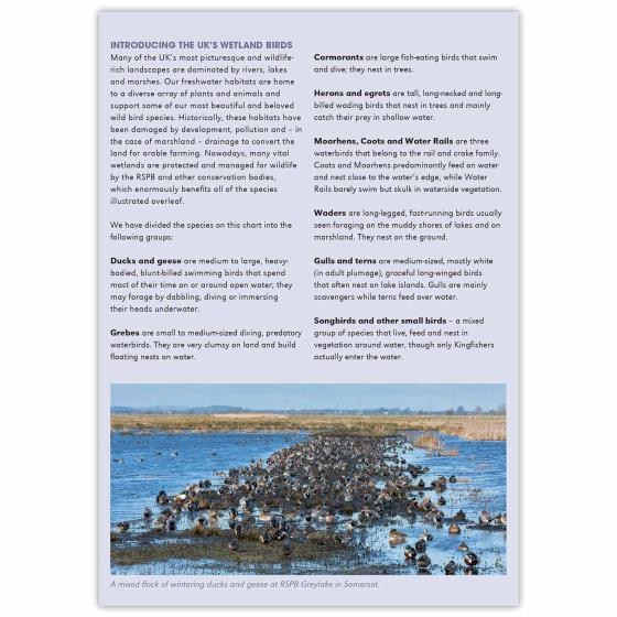 Wetland birds identifier chart - RSPB ID Spotlight series product photo Back View -  - additional image 2 L