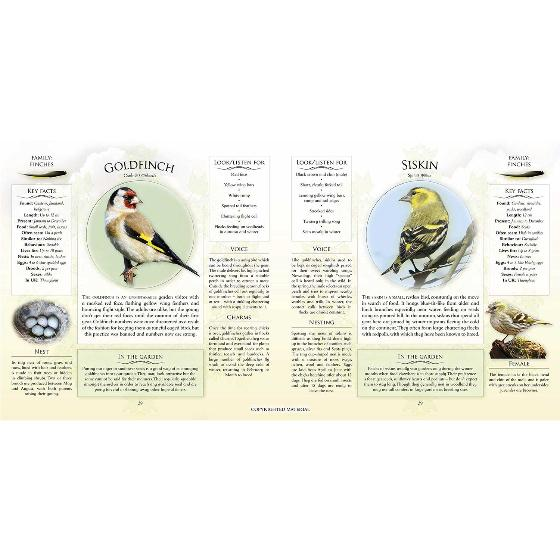 What's that garden bird?: Birdspotting Wheel and Guide Book product photo Front View - additional image 1 L