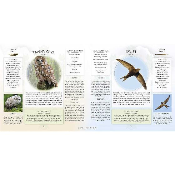 What's that garden bird?: Birdspotting Wheel and Guide Book product photo additional image 5 L