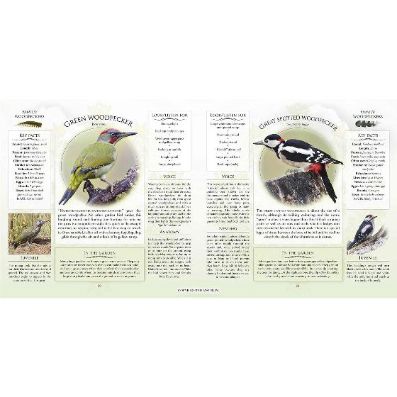 What's that garden bird?: Birdspotting Wheel and Guide Book product photo additional image 4 L
