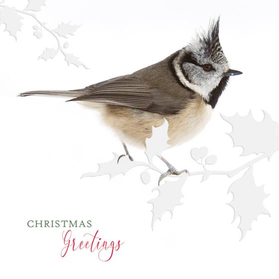 Winter perching RSPB charity Christmas cards - 10 pack product photo Side View -  - additional image 3 L