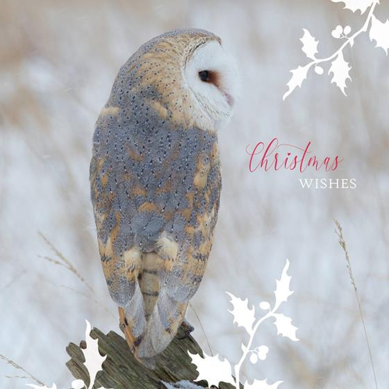 Winter perching RSPB charity Christmas cards - 10 pack product photo Back View -  - additional image 2 L