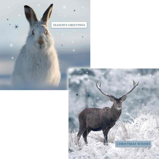 Winter sparkle RSPB charity Christmas cards - 10 pack product photo