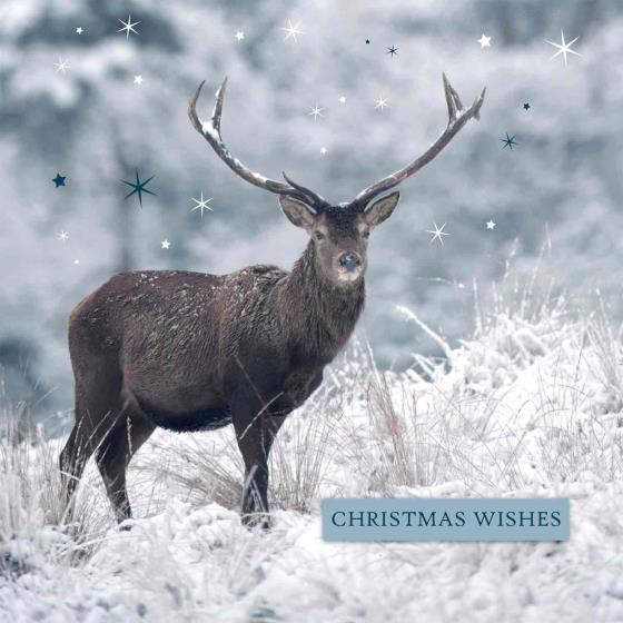 Winter sparkle RSPB charity Christmas cards - 10 pack product photo Back View -  - additional image 2 L