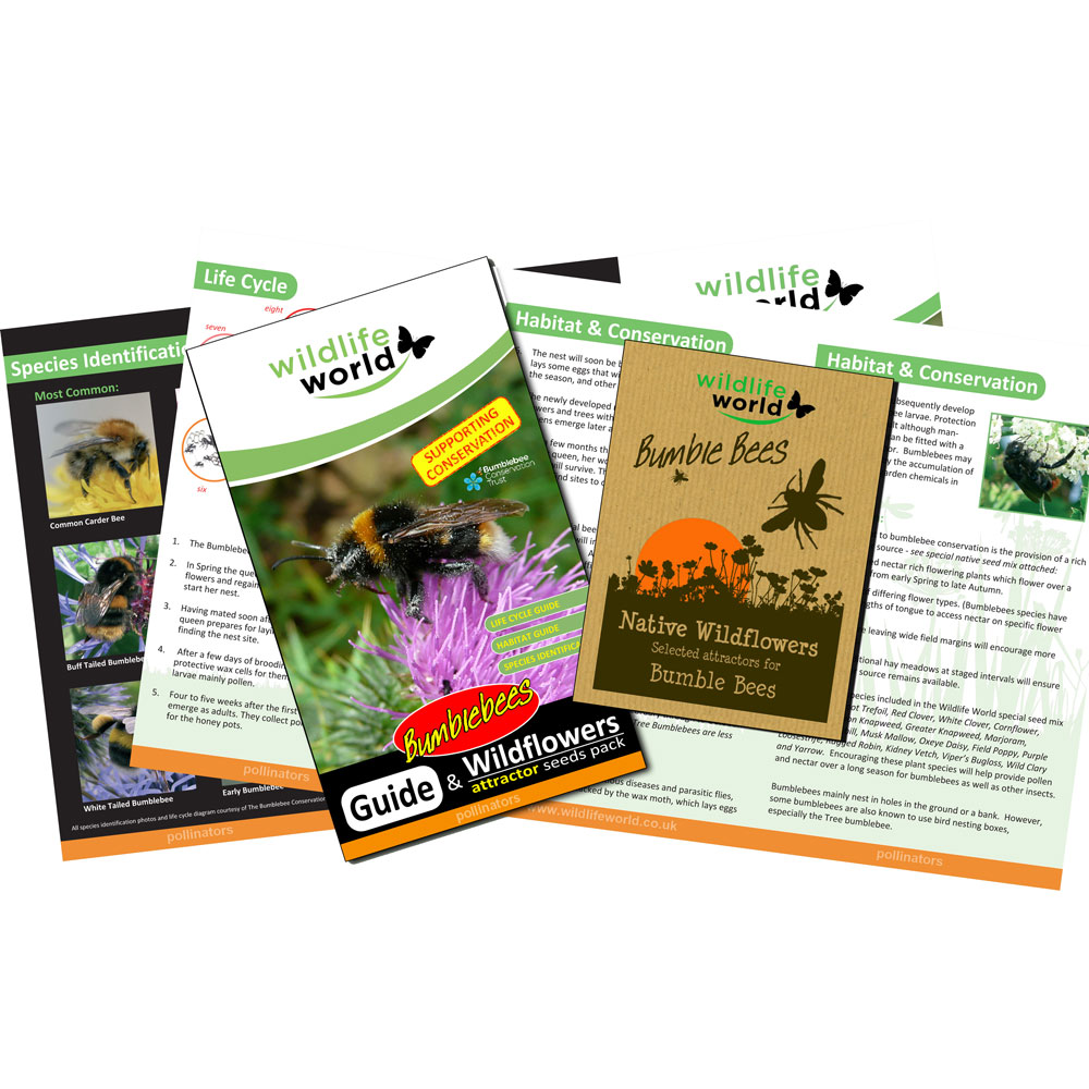 Bumblebee attractor seed pack product photo Back View -  - additional image 2 L