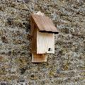 RSPB Single chamber bat box & seeds product photo Back View -  - additional image 2 T