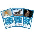 RSPB British Birds Top Trumps product photo Front View - additional image 1 T