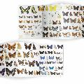 Butterflies identifier chart - RSPB ID Spotlight series product photo Side View -  - additional image 3 T