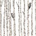 Woodpeckers in a birch forest card product photo