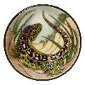 Moorcroft, Sand Lizard product photo