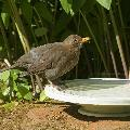 Nature Oasis bird bath & drinker product photo additional image 4 T
