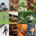RSPB Garden birds calendar 2021 product photo Back View -  - additional image 2 T