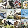 RSPB Pam Grimmond bird prints calendar 2021 product photo Back View -  - additional image 2 T