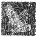 Silent night RSPB charity Christmas cards - 10 pack product photo