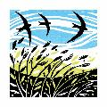 Swooping Swifts greeting card product photo