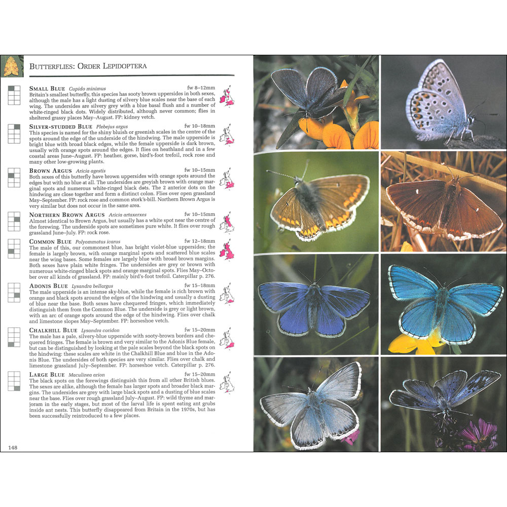 Collins Complete Guide to British Insects product photo Front View - additional image 1 T